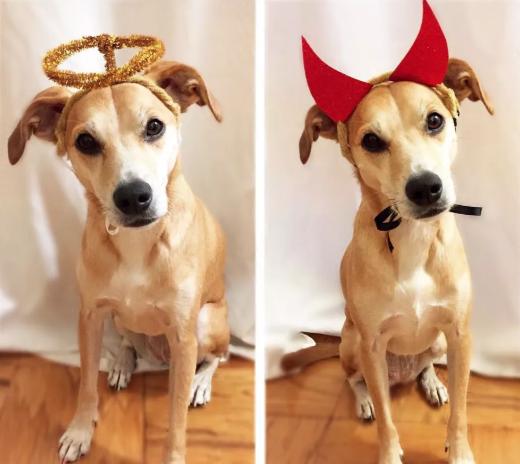 DIY dog costumes